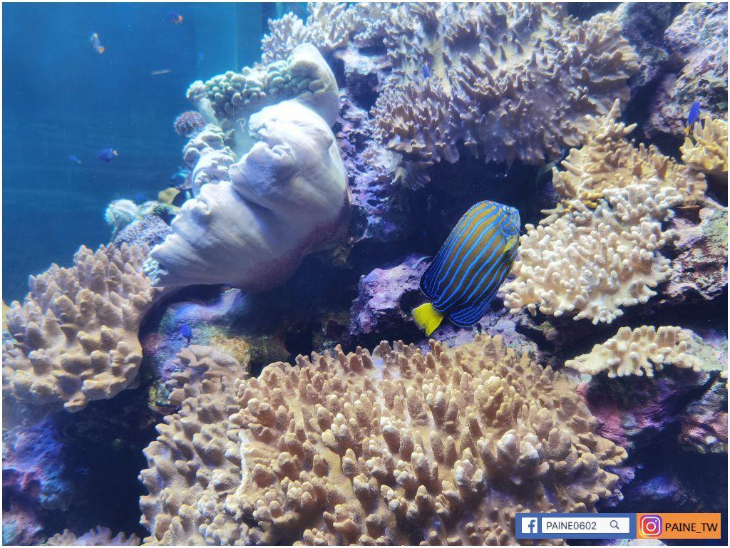 海洋生物博物館